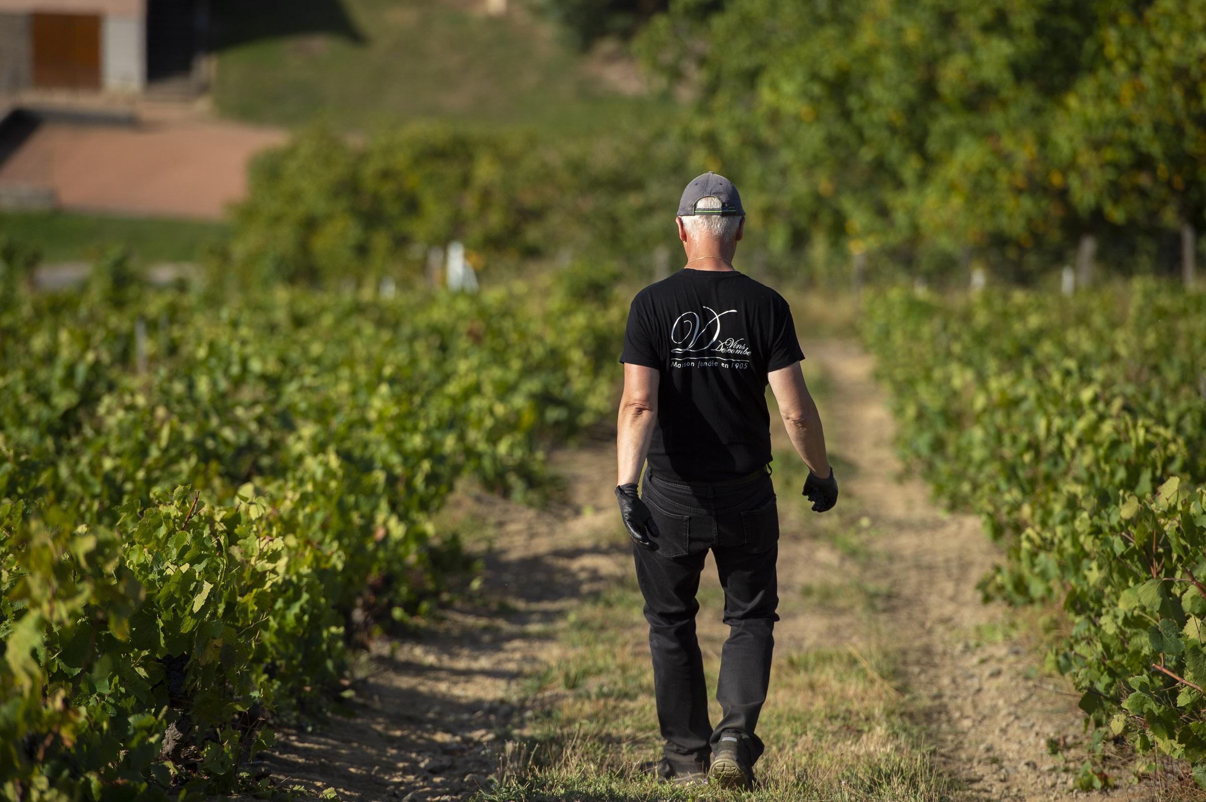 Travail viticole